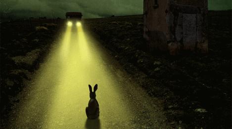 Кролик в свете фар